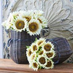 Large Cream Sunflower Stem