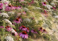 Rosanna Castrini's My Prairie Garden - a stunning entry in a past International Garden Photographer of the Year competition. It was the overall winner and took first prize in the Beauty of Plants category. The photograph can be seen at the Beth Chatto Gardens exhibition
