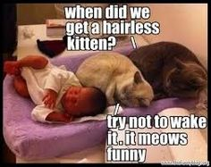 Cats and kittens are the funniest animals on Earth. They always make us laugh! Just look how all these cats & kittens play, fail, get along with dogs, make Funny Animal Memes, Funny Animal Pictures, Funny Animals, Cute Animals, Funniest Animals, Funny Memes, Animal Humor, Funny Cat Quotes, Funny Photos