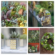 succulents Oh my!  And succulent wall art swoonalicious! << If that wasn't a word, it is now ;)