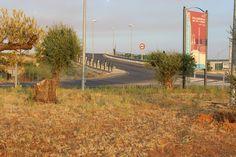 Rotonda de entrada por Barriada El Carbonal. Se taló un olivo que daba mucha vista a la entrada del pueblo. 18/09/2013