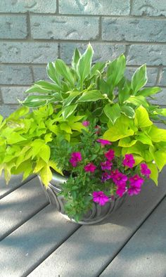 Container  planting made of hosta, sweet potato vine, and petunia Peat Moss, Shade Garden, Gardens, Outdoor Spaces, Container Gardening, Beautiful Flowers, Shades, Nature, Plants
