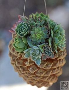 18. DIY #Hanging Pine Cone Succulent #Planter - 35 Pine Cone Crafts to… #Garland
