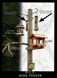Flickr: bird feeder Timeline