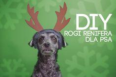 #reindeer #antlers #dog #christmas #DIY