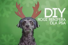 #reindeer #antlers #dog #christmas #DIY