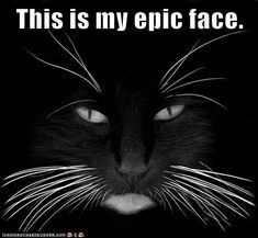 Reminds me of my cat Priscilla Presley (named for her back in the day, when her hair was dark...)
