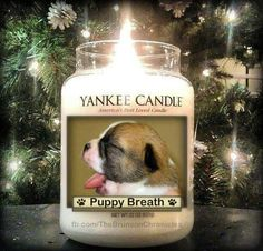 Yankee Candles has a candle for you. Xmas presents? lol.