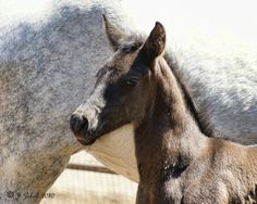 Andalusian Colt by OldShutterBug, via 500px