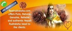 Rudraksha is a mystical bead of Hindu Mythology & Meditation. We pride ourselves in providing Lab Certified, best quality and original Nepali Rudraksha beads