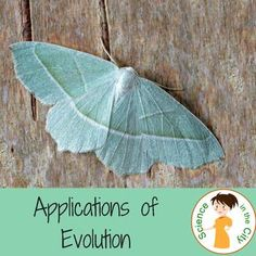 Evolution: Modern Application Station Activity by Science in the City Biology Lessons, Science Lessons, Life Science, Secondary School Science, Middle School Science, Biology Classroom, Teaching Biology, Science Resources, Activities