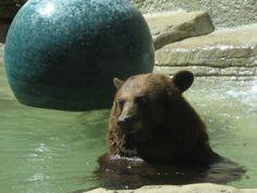 Sweet Baylor Bear...Sic 'Em!