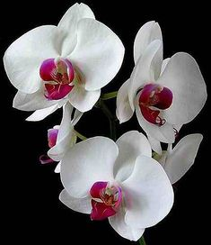 Orchids bloom for months so even a thirty dollar pot is a great investment. They are easy to grow too!