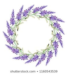 Similar Images, Stock Photos & Vectors of Set of lavender flowers elements. Collection of lavender flowers on a white background. Botanical Flowers, Lavender Flowers, Circle Labels, Art Drawings, Floral Wreath, Royalty Free Stock Photos, Watercolor, Purple, Illustration