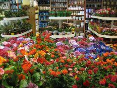 #plants #flowers  2011