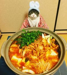 """いいね!1,736件、コメント107件 ― @rinne172のInstagramアカウント: 「キムチ鍋(""""kimchi hot pot"""") #cat#cats#catstagram#catsofinstagram ##instacat_models#instacat_meows #猫…」"""