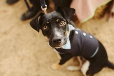 offbeat08 by Sean Dorgan, via Flickr    We need to have a little tux made for our dag, Banjo!