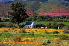 Spring is in the air - de Rust, South Africa ( by Giel Groenewaldt) Farm Pictures, Flower Landscape, Timeline Photos, Country Farmhouse, Wonders Of The World, South Africa, Beautiful Places, Farm Houses, Nature