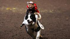 monkey rides dog   Bubu The Murderous Monkey » SO YOU WANT TO SEE MONKEYS RIDING DOGS ...