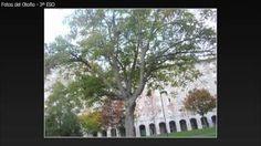 fotos otoño - YouTube