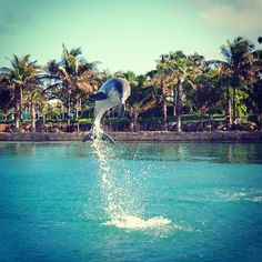 Jump for joy!  Played with dolphins! @Matt Valk Chuah Dolphin Cay at Atlantis Resort in Nassau Paradise Island 4/2011.