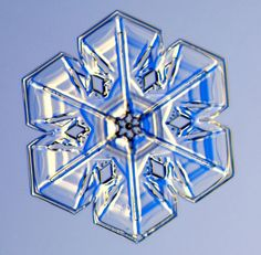 Photographs of real snowflakes reveal an even more amazing variety than you might have expected.