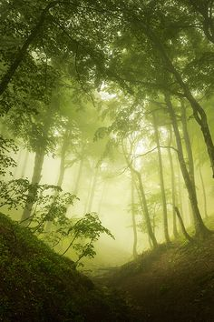 Silent forest by Xavier Jamonet