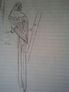 I think it's a parrot...