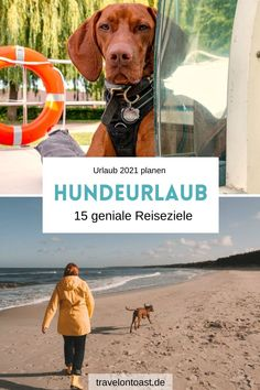 Fish, Vizsla, Holland, Sports, Pictures, Spain Travel, Dog Travel, The Nederlands, Hs Sports