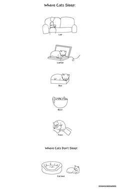 Where Cats Sleep?  ---Cats sleep where where ever they want to sleep...