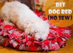 Here's a DIY bed for your adorable dog. You don't need to spend more to make one and it's a No Sew so it's easy and fun!!