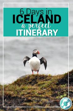 6 Days in Iceland: A Complete Itinerary Puffin