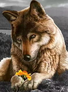 The artist did a great job with this wolf looking at the flower.