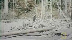 'Proof' of Bigfoot?Group releases list of top 10 filmed encounters | Fox News. Top 10 watched...not necessarily credible.