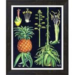 Evive Designs Vintage Pineapple Chart by Evie Alessandria Graphic Art & Reviews | Wayfair