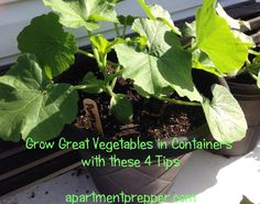 Grow Great Vegetables in Containers with these 4 Tips