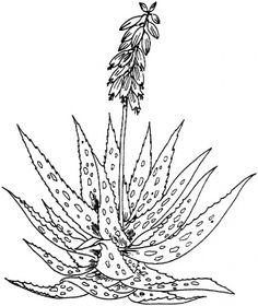 1000 images about cactus on pinterest coloring pages