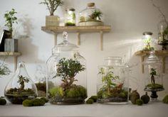 DIY : notre mode d'emploi du terrarium