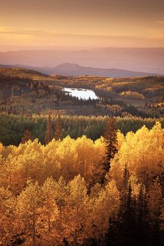 5 Quick Tips For Photographing Fall Foliage