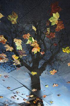 L'automne dans mes yeux   Le vent flirte avec les feuilles Plus de vers sur ma page Quelques notes de chèvrefeuille Ni même l...
