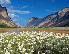 Current dream vacation is to hike to the Torngats in Labrador, Canadaland by way of Quebec and the Trans Canada Trail. Supposed to have some amazing polar bear and glacial sightings, and it's so rugged and remote you need an Inuit guide with you at all times.