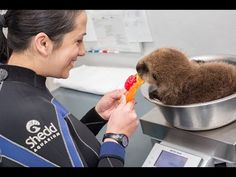 Watch a Baby Otter Play With a Tiny Basketball and Try Not to Explode