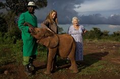 Elephant mother: Daphne Sheldrick, 79, is still caring for orphans of the poaching epidemic - World - News - London Evening Standard