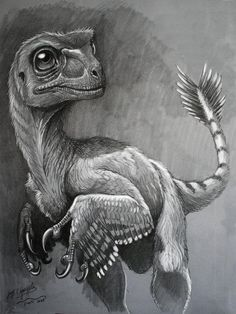 feathered dino pencil sketch
