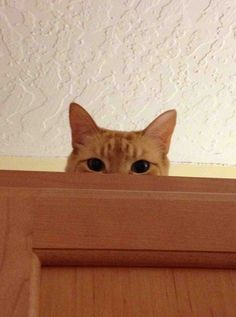 14 Cats Who Are WATCHING You
