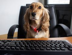 Welthundetag 2016 - Bürohund Pebbles