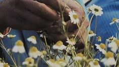 A seed is the New Gift of life.  #shortfilm #sustainability #culture #environment