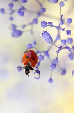 Little ladybug. @3 likes 4 repins  Profile picture of Jan Henderson    Jan Henderson via Worldwide Realtor