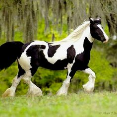 Dream horse.  Thank you god for putting horses on earth!