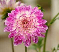 New free stock photo of nature petals plant #freebies #FreeStockPhotos